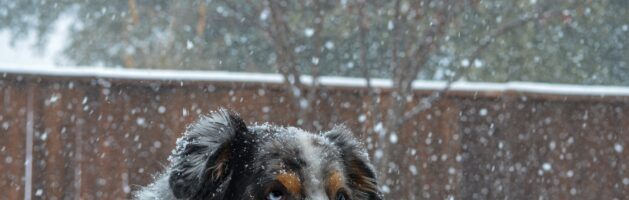 Is It Possible To Keep A Dog House Warm For The Winter?